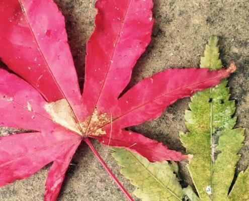 maple-leaves-secret-garden-studio
